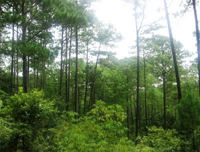 En Mazamitla, destruyen bosque por aguacates – Crónica de sociales